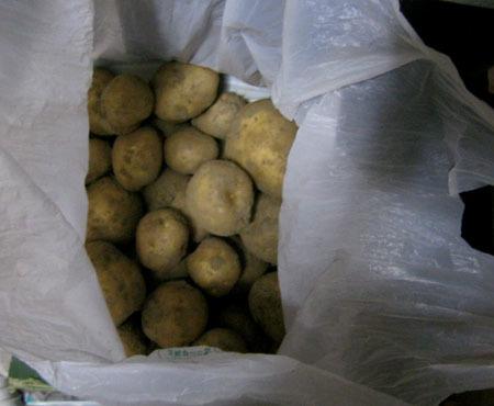 朝採りジャガイモ