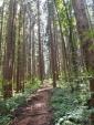 太平山 旭又コース杉並木