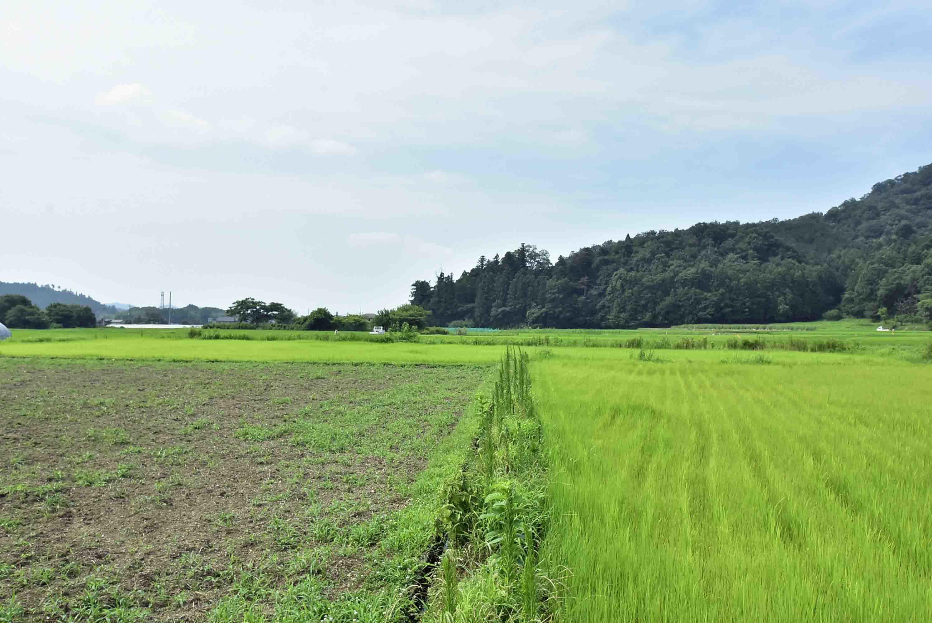 _DSC4994岩崎城 遠景