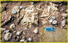 中国最古の骨