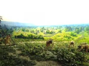 石器時代の農業