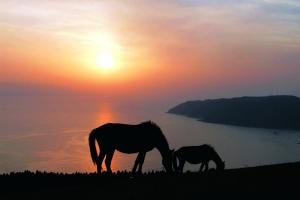 6 御崎馬 日暮れ