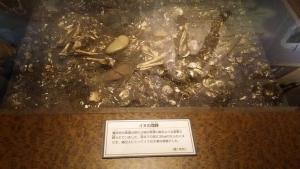 84 犬化石