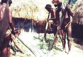 55 パプアニューギニア料理