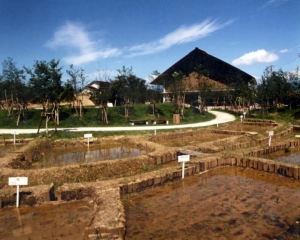 16 菜畑遺跡