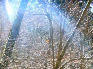 2 高住神社 木々への光