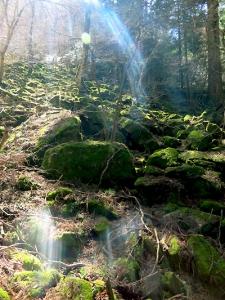 3 高住神社 岩への光