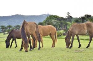9 御崎馬