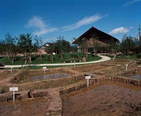 29 菜畑遺跡