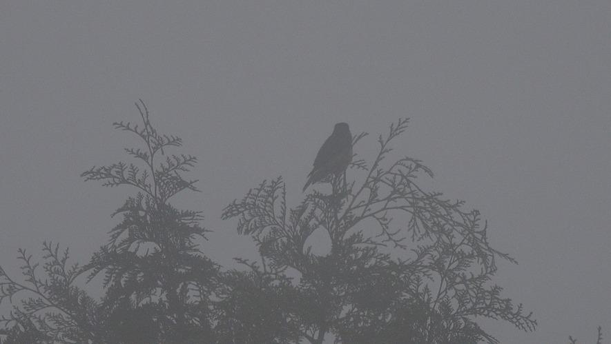 ooruri5995-180423-08d.jpg