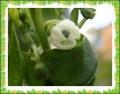 9 26 パレルモ花