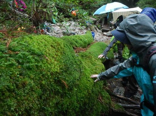 4月14日 ヒノキコケを触る登山者