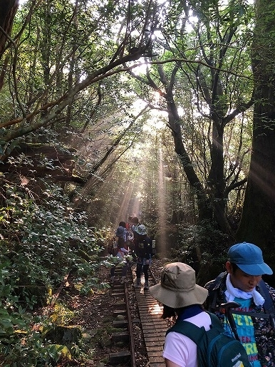 木漏れ日の登山道 7月14日 縄文コース