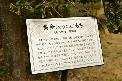 街路樹の説明書き