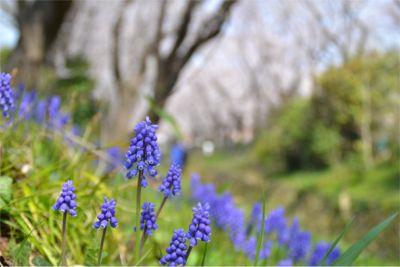 花の散歩径イメージ
