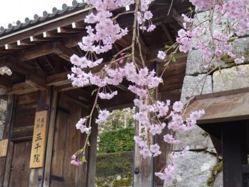 2018年4月5日 京都大原三千院