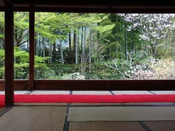 2018年4月5日 京都大原宝泉院