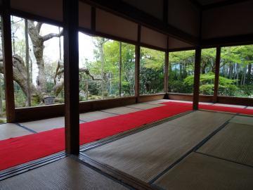 2018年4月5日 京都大原宝泉院 松