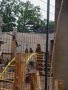 2018年9月13日 旭山動物園 サル山