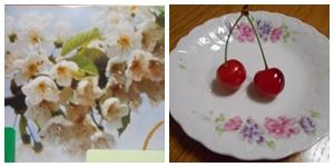 さくらんぼ花と実