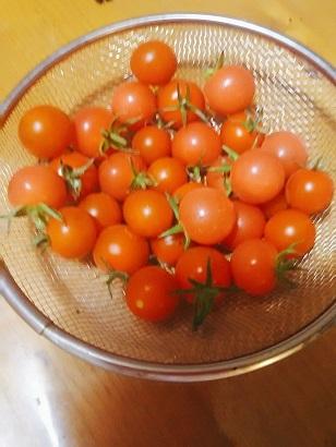 6-27収穫 (2)