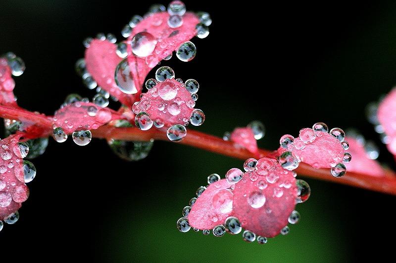 雨粒でお化粧
