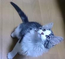 リンセ子猫