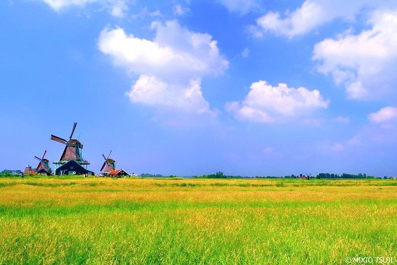 絶景探しの旅 - 0693 輝く干拓地を渡る風 (オランダ 北ホランド州 ザーンダム)