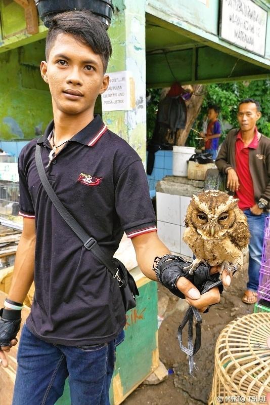 絶景探しの旅 - 0710 パサールブルンのフクロウを売る少年 (ジャカルタ インドネシア)
