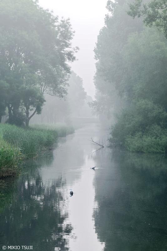 絶景探しの旅 - 0716 朝靄のアムステルパーク (オランダ アムステルダム)